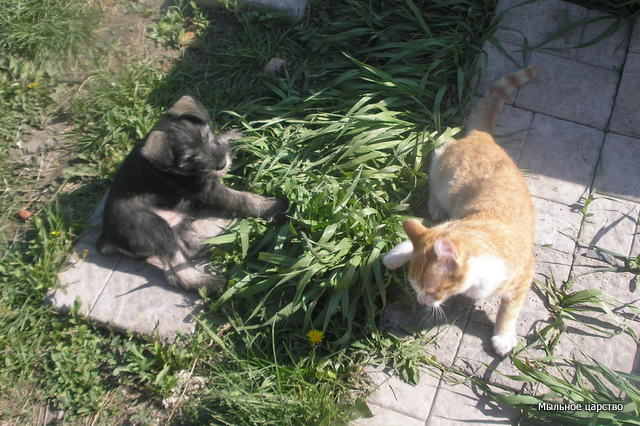 Наши любимые животные - Страница 2 Dnnzn_11