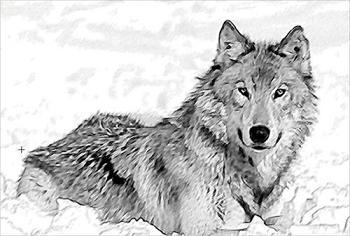 Les races sur Ouranos Loup11