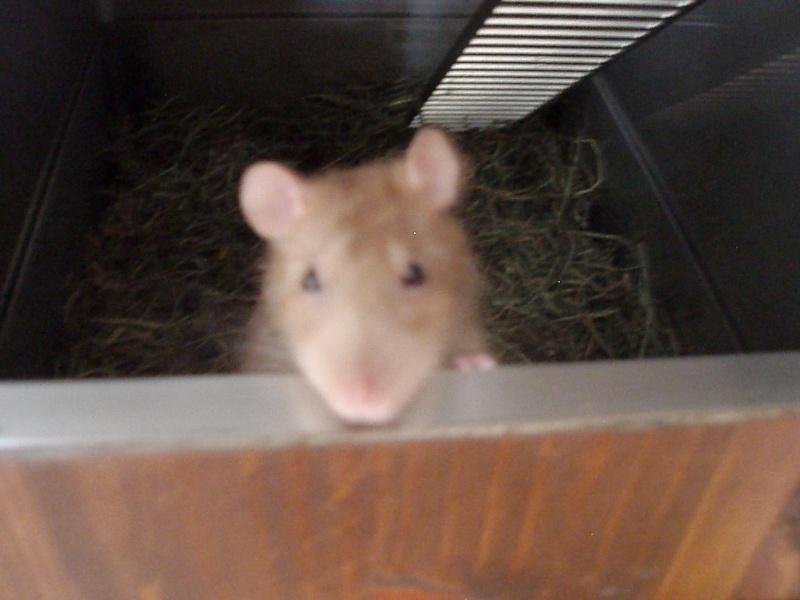 UN DUPLEX POUR RATS P4100010