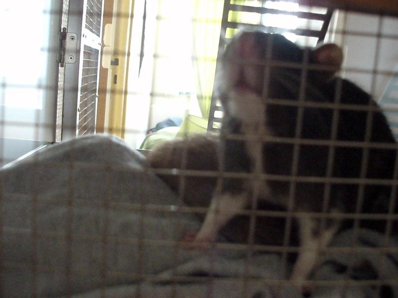 UN DUPLEX POUR RATS P4100011