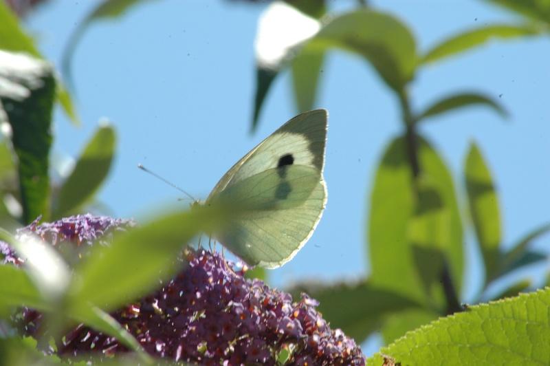 Le fil de l'entomologie 20110610