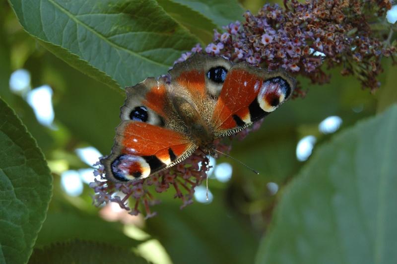 Le fil de l'entomologie 20110611