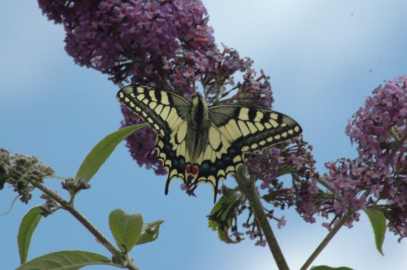 Le fil de l'entomologie 20110615
