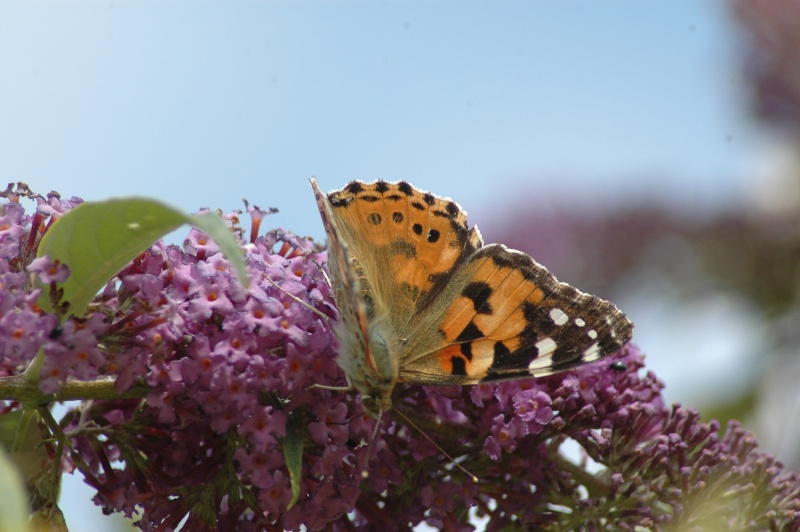 Le fil de l'entomologie 20110620