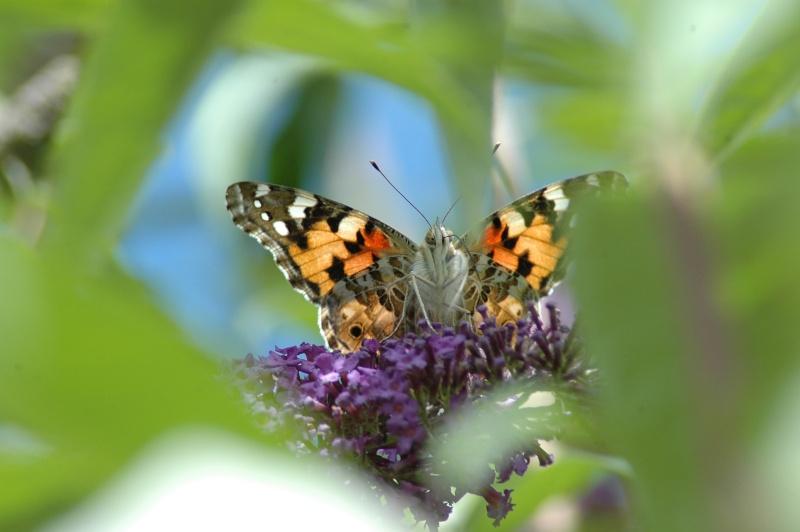Le fil de l'entomologie 20110621