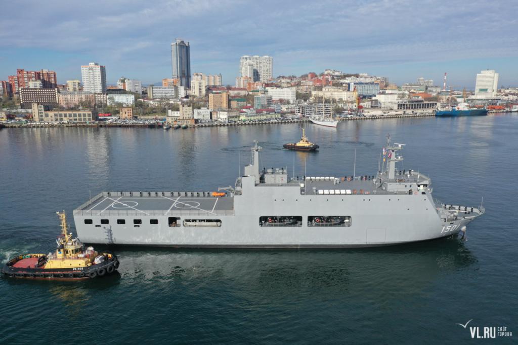 Marine Birmane Vlru10