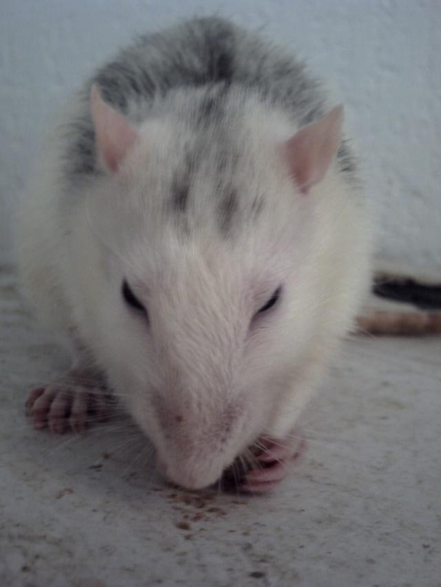 Joyeux demi rat-nniversaire ! Lvm_il10