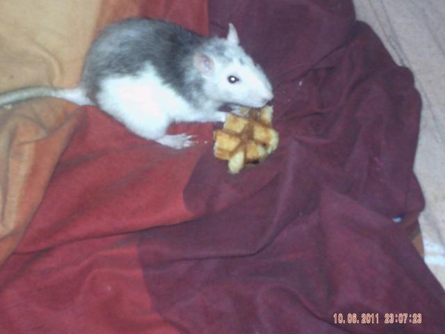 Joyeux demi rat-nniversaire ! Pict0211