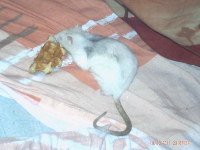 Joyeux demi rat-nniversaire ! Pict0212