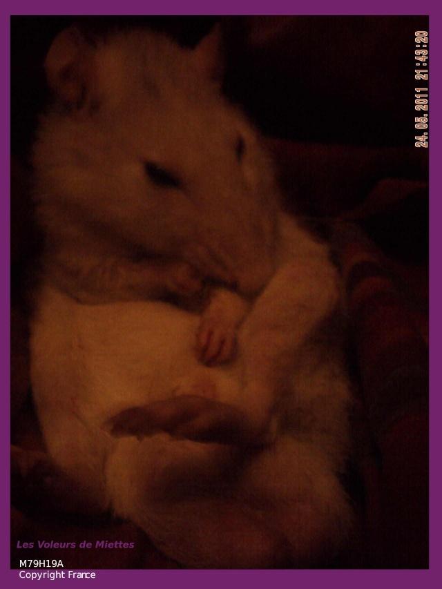 Joyeux demi rat-nniversaire ! Vieil_11