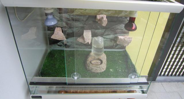 Regalo tartaruga Testudo graeca Img_2817