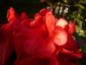 Je n'aime pas les rhododendrons! Rhodo_10