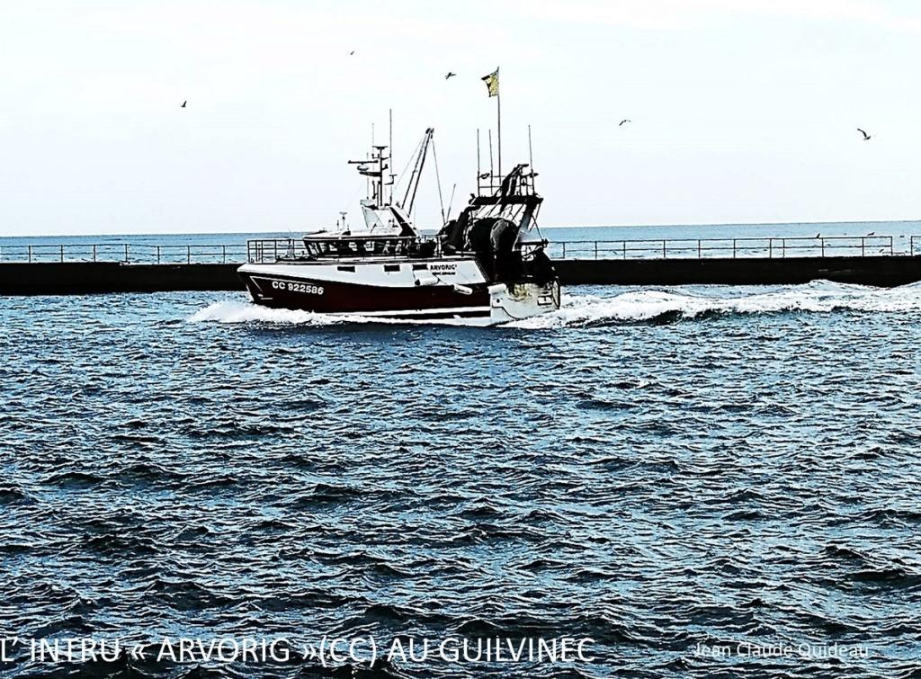 [Activité des ports] Le Guilvinec - Page 12 Arvori10