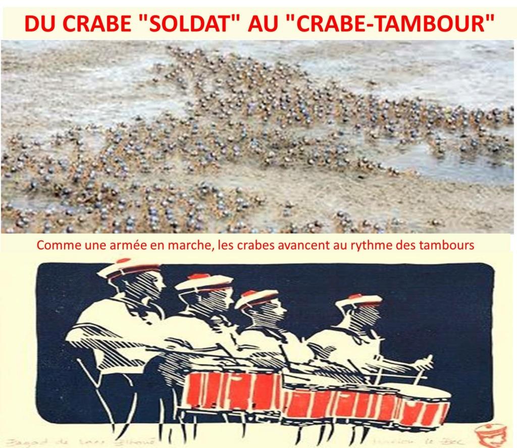 [Activité des ports] Le Guilvinec - Page 13 Crabe_10