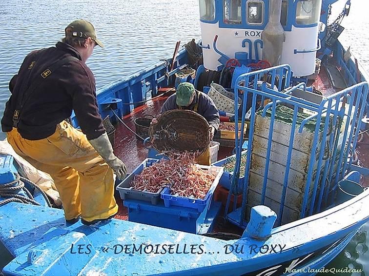 [Activité des ports] Le Guilvinec - Page 12 Les_de10