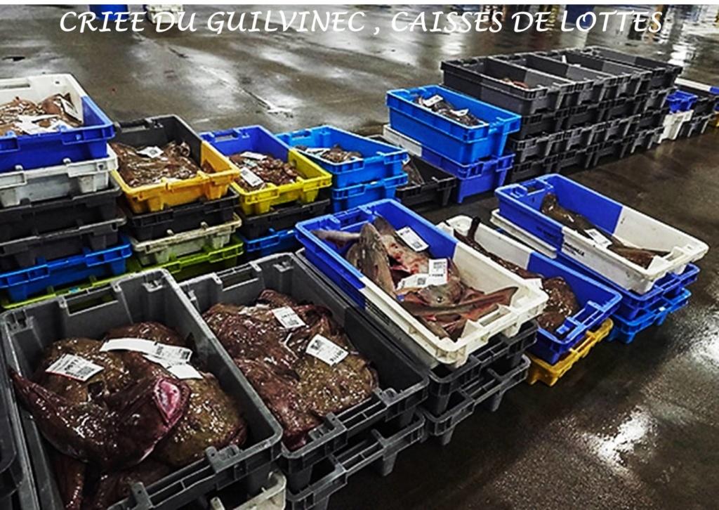 [Activité des ports] Le Guilvinec - Page 12 Lottes10