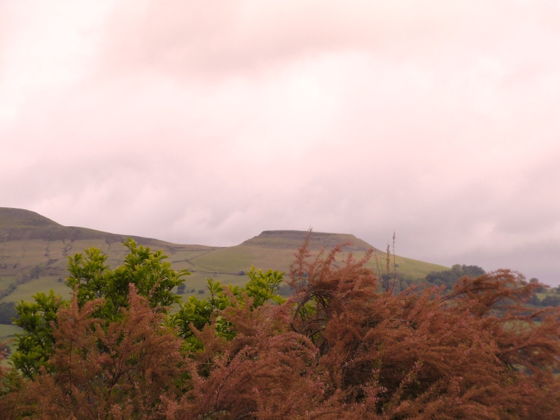 llangattock escarpment to lonely sheppard,crickhowell area Dsc02812