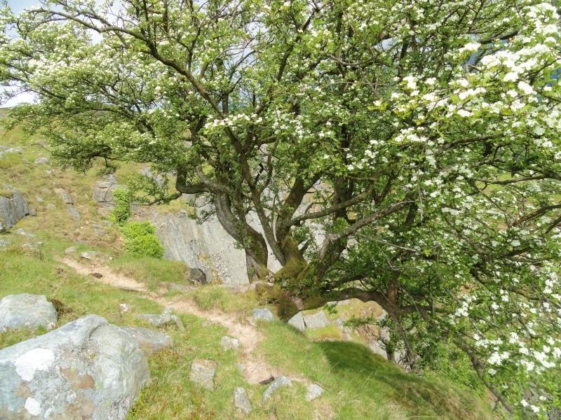 llangattock escarpment to lonely sheppard,crickhowell area Dsc02834