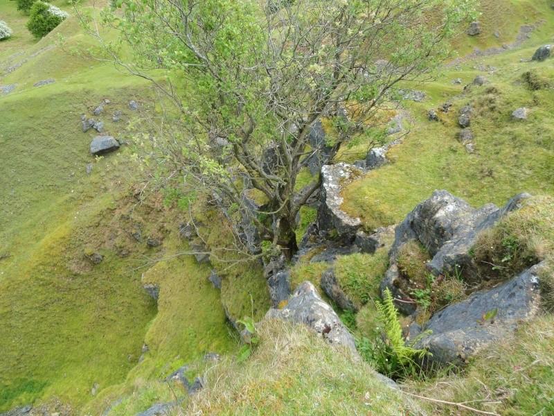 llangattock escarpment to lonely sheppard,crickhowell area Dsc02837