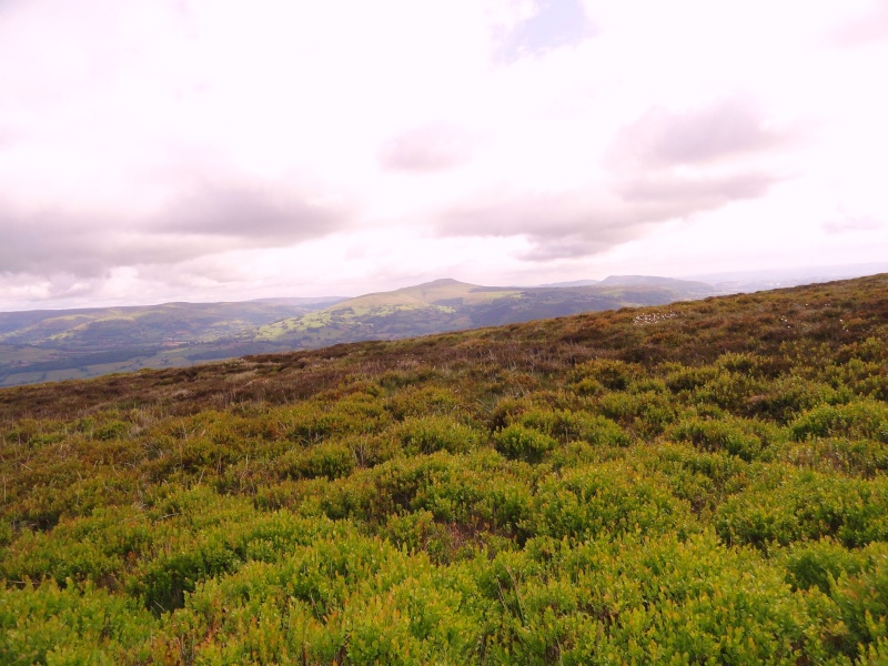 llangattock escarpment to lonely sheppard,crickhowell area Dsc02852