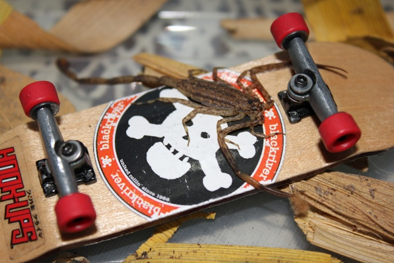 your fingerboard set-up - Page 7 Img_1010