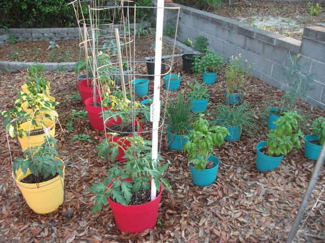 tomato tues for lower south Pots_o10