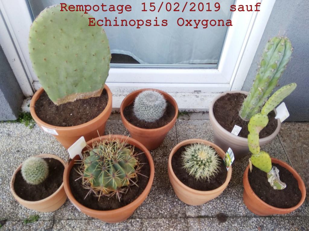 Rempotage février 2019 Img_2013