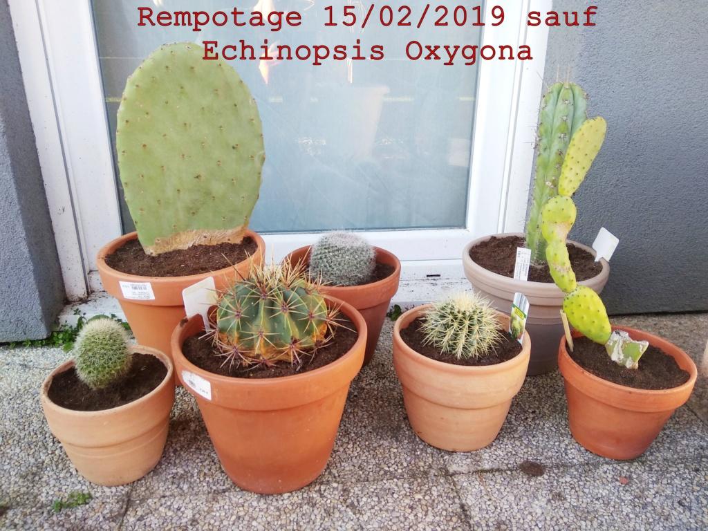 Rempotage février 2019 Img_2014