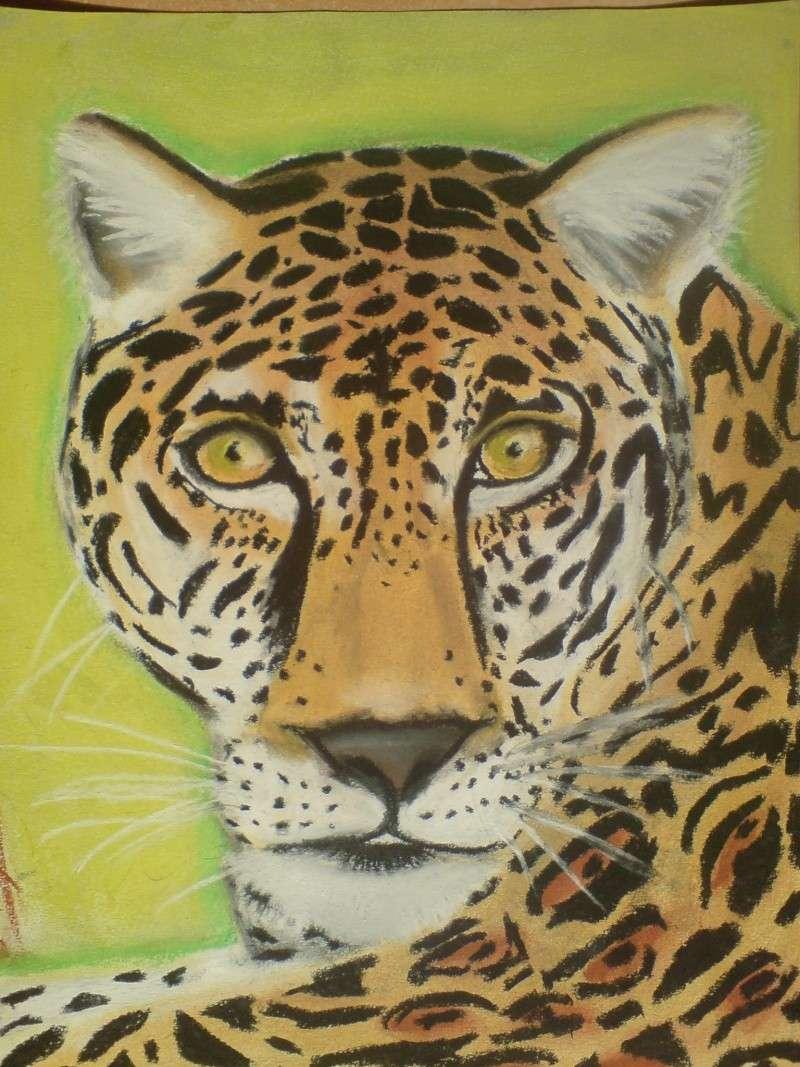 Le Jaguar Dsc00511