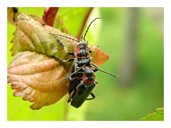 Et le reste .... Insect11