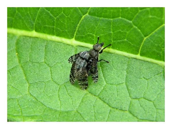 Et le reste .... Insect12