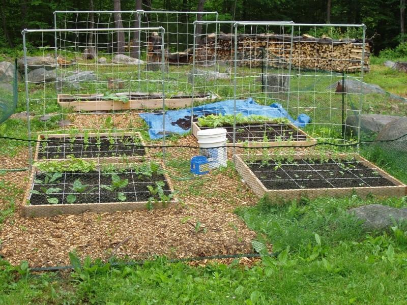 Garden pictures, June 11 Garden10