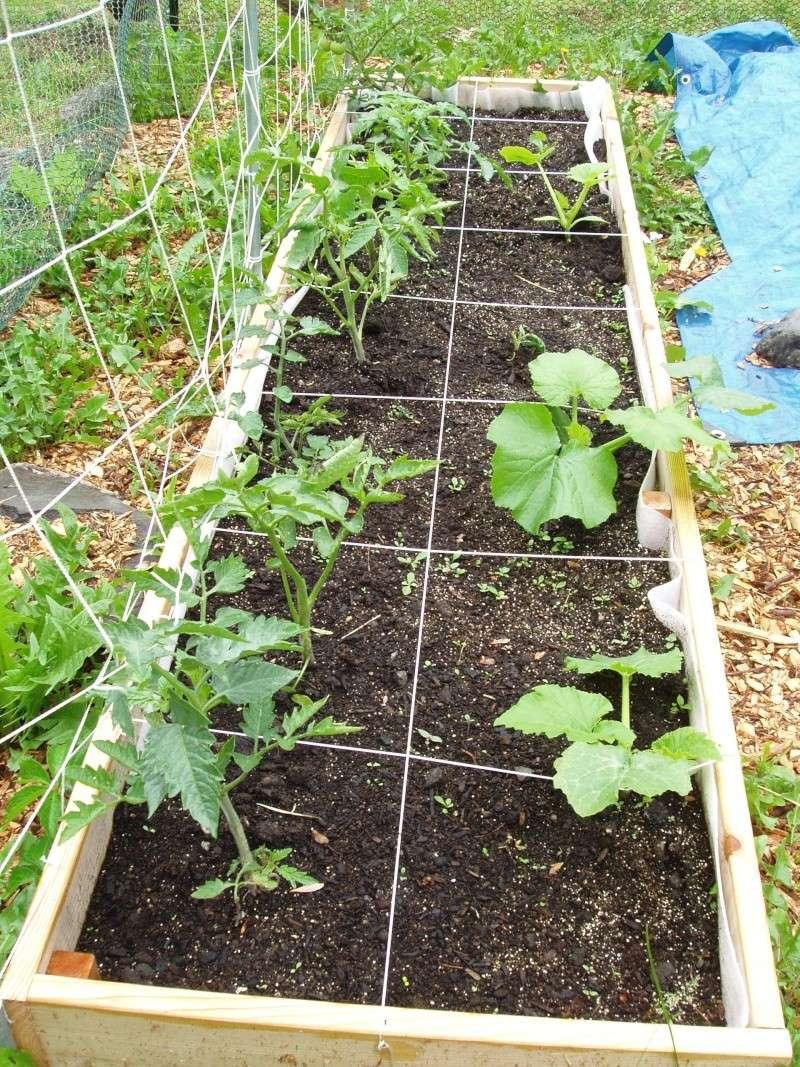 Garden pictures, June 11 Garden11