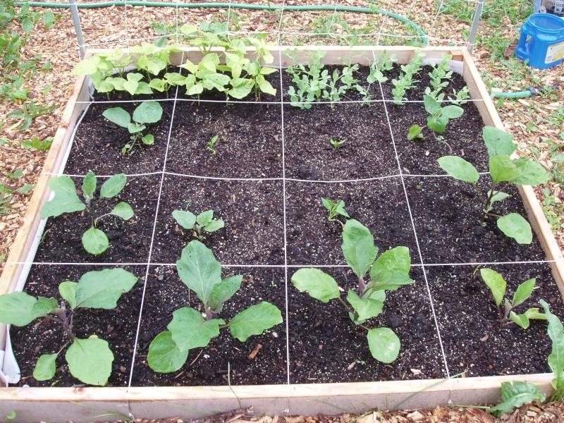 Garden pictures, June 11 Garden12