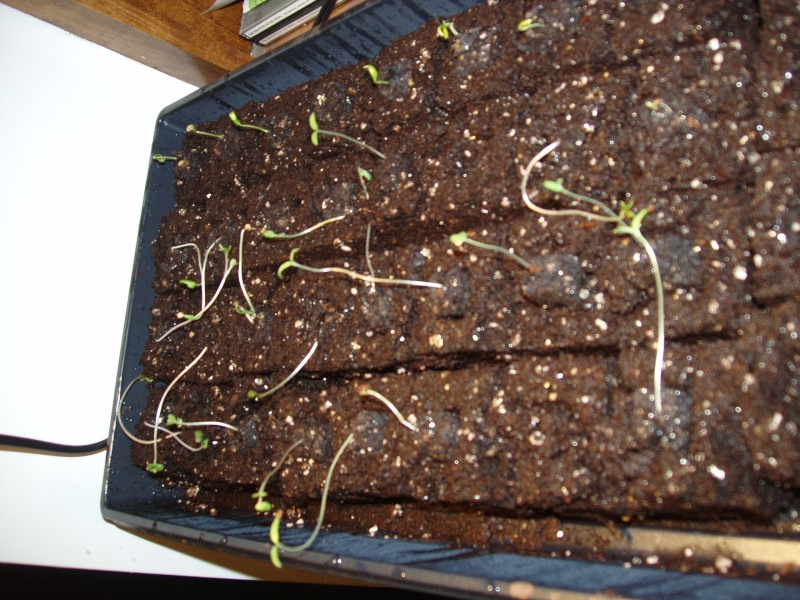 My soil blocks keep falling apart Seedli10