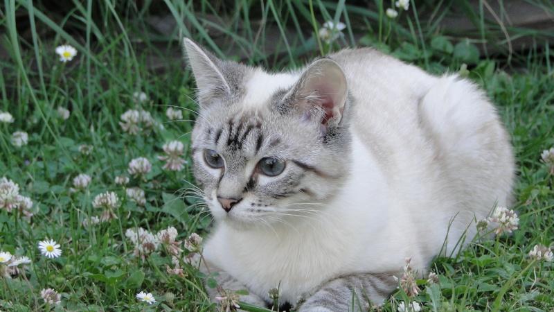 *** spécial *** photos de nos animaux *** - Page 2 Dsc00610