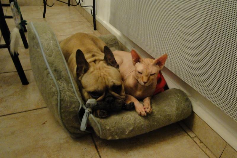 *** spécial *** photos de nos animaux *** - Page 2 Dsc01911