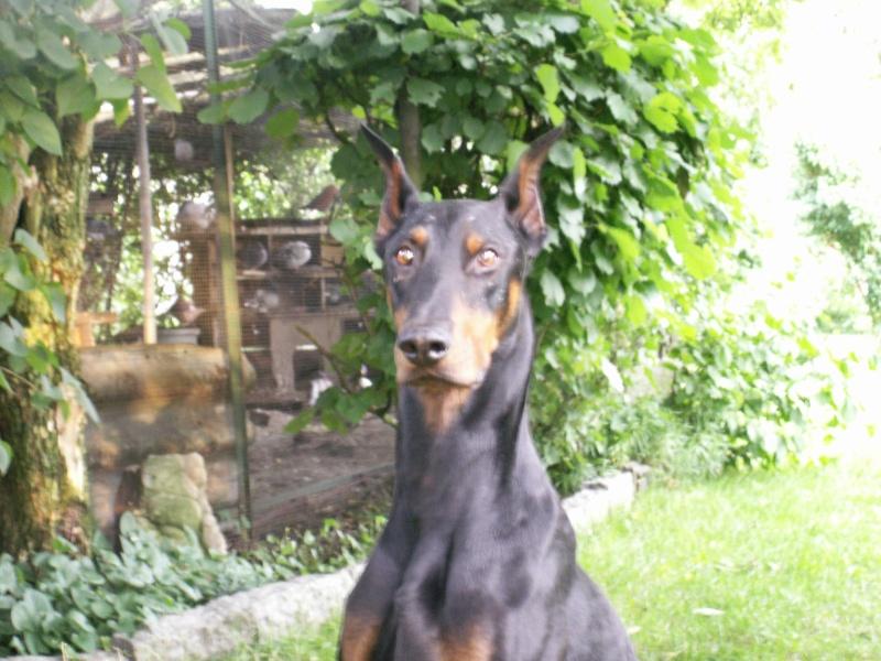 *** spécial *** photos de nos animaux *** - Page 2 Pict0012