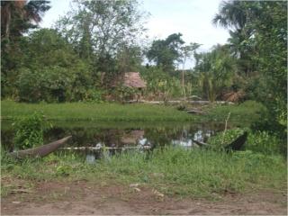 Donación de Plantas Eléctricas, a Nuestros Hermanos Indigenas de la Comunidad de Capure, Estado Delta Amacuro Imagen31