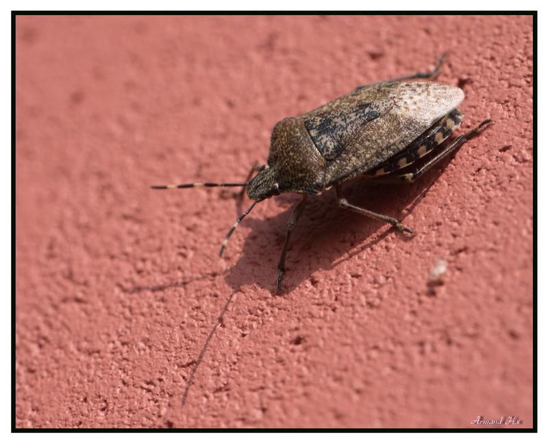 C'est quoi comme insecte svp ? Merci Questi11