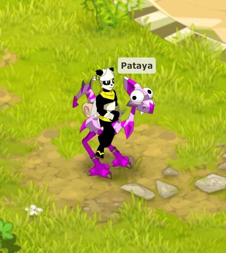 Pataya veut rejoindre vos rang... Pataya11
