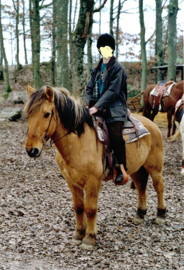 SAM - Poney typé Henson né en 1986 - adopté en septembre 2011 par Emeline - Page 2 Aurore11