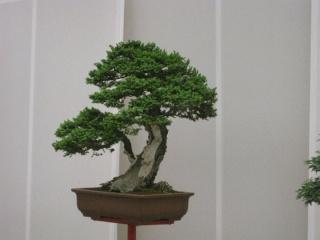 Euroflora 2011 12410