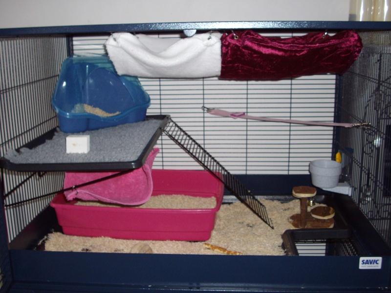 Photos de vos cages - Page 3 Cage_b10