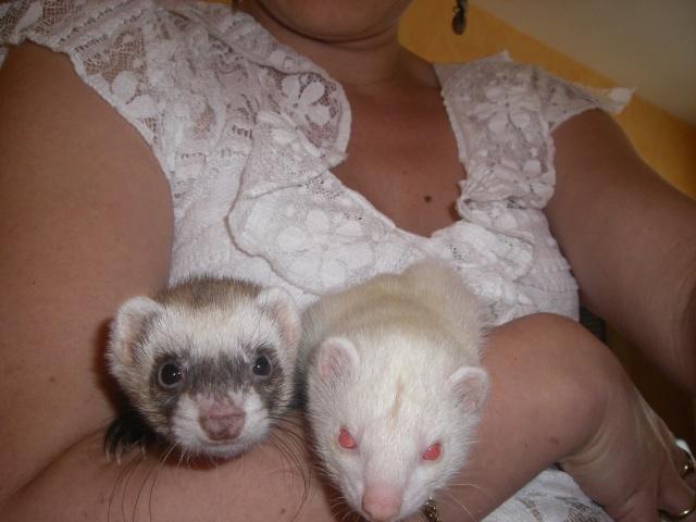 [PERDUE] Tagada, femelle albinos Gjddel13