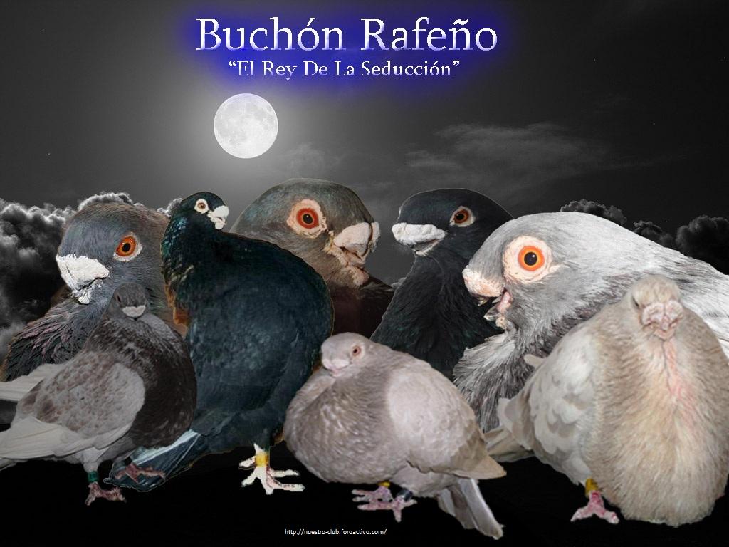 Club Del Buchón Rafeño