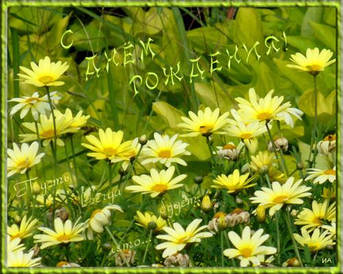 С Днем Рождения, Modestie! 7b380610