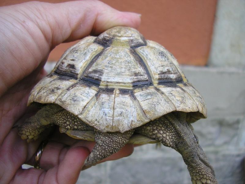 Identification des mes tortues 1110