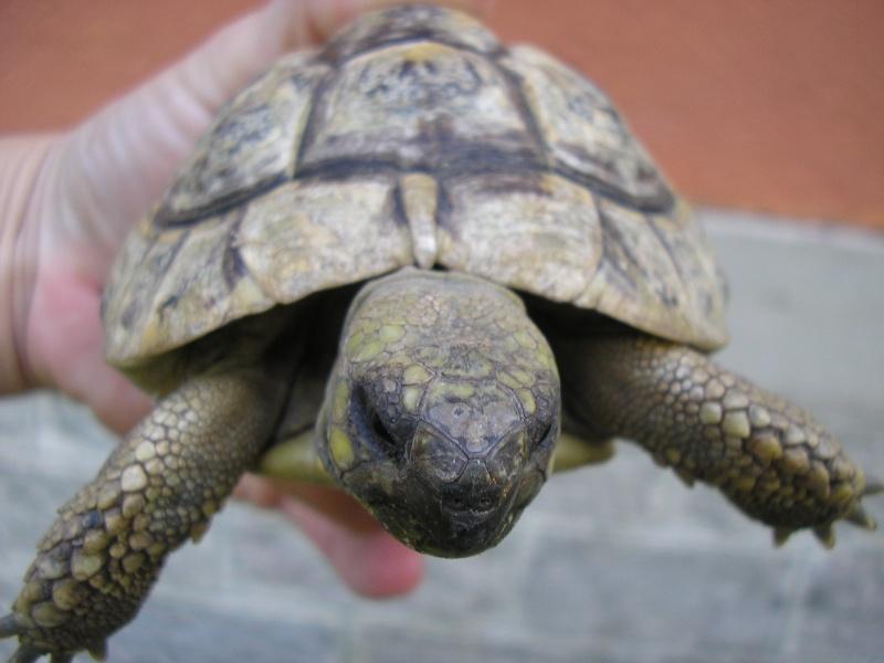 Identification des mes tortues 1210