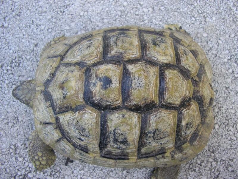 Identification des mes tortues 1310
